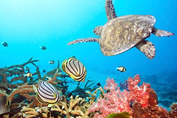 Die bunte Unterwasserwelt auf den Malediven
