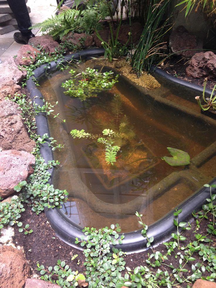 Our city garden...we got fish