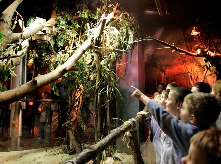 kinderen wijzen naar leguaan in boom