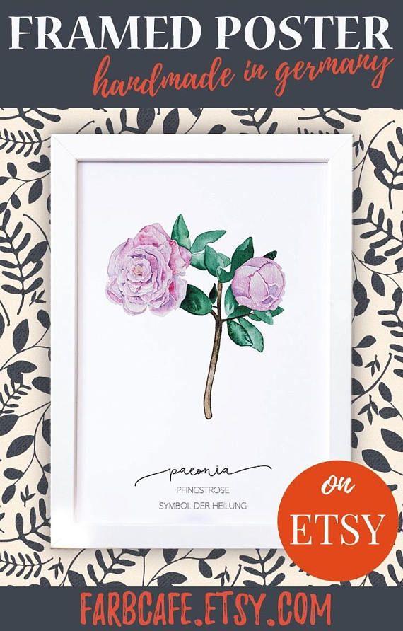 Poster mit Rahmen A4 Pfingstrose botanisches Aquarell mit | ☆ Etsy ...