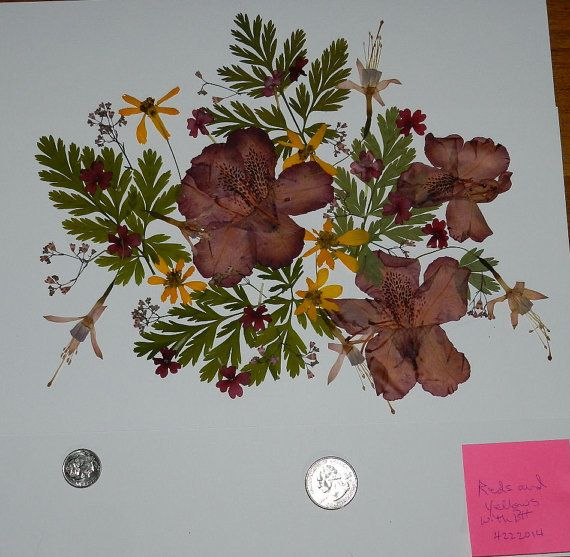Real Dried and Pressed Flowers over 35 by TickiesTreasures on Etsy, $5.49