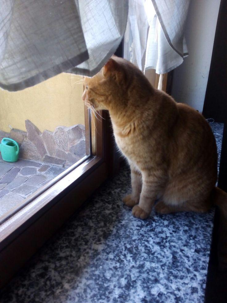 Alla.finestra. Pallina .(chi aspetta?........