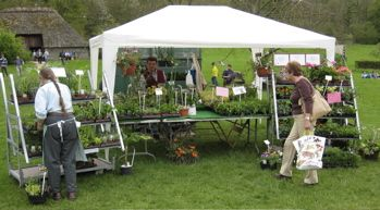 Fundraise By Holding A Plant Sale
