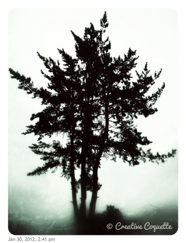 Tree: 30/366: Awesome Trees, Natural Photography, Creative Photo, Black And White, Beautiful Trees, Photographers Genius, Photography Architecture Art, Magic Trees, Leaf Trees