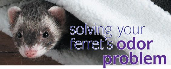 homemade ferret toy - Google Search
