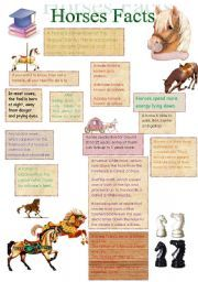 25+ best ideas about Facts about horses on Pinterest | Interesting ...