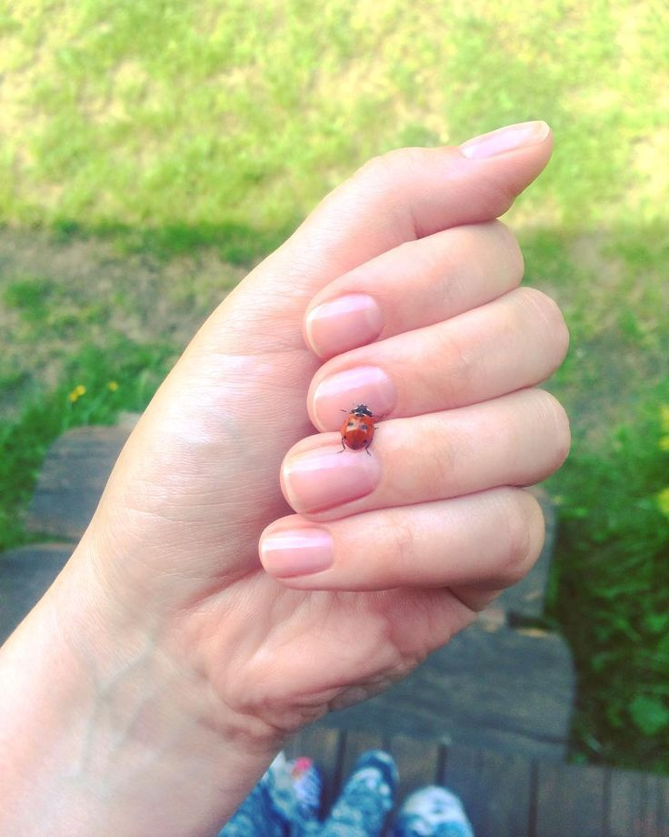 Hello little one!  #ladybird #coccinella #spring #luck #green #primavera #weekend #biedroneczkisawkropeczki #nature #sunday