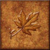 DM-Lodge Maple Leaf 4 - Accent Tile