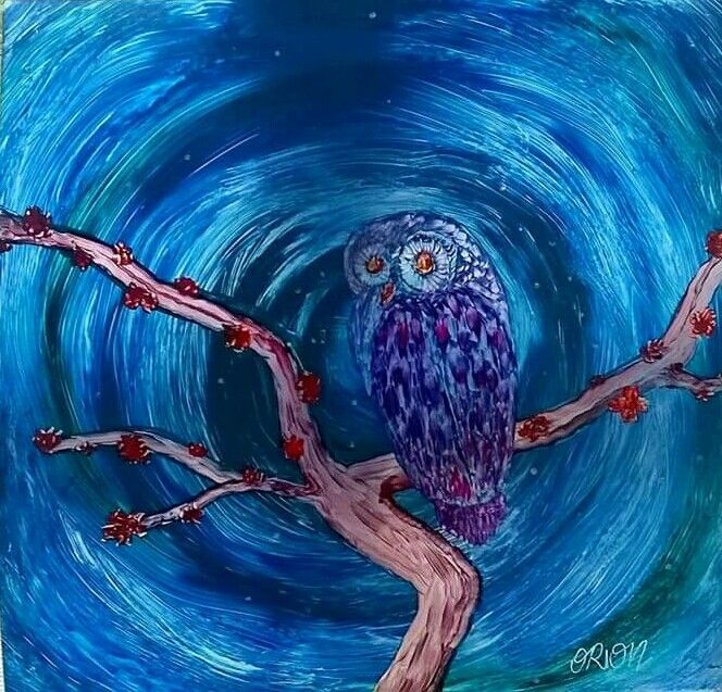 orion owl gufo notte  night