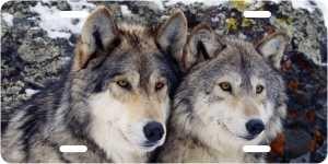 Wolf License Plates