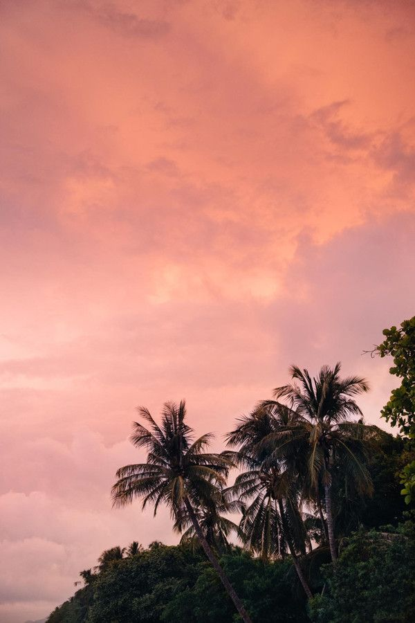 Palm trees with a cotton candy sunset sky in Tamarindo, Costa Rica. Photographed by Kristen M. Brown, Samba to the Sea for The Sunset Shop.