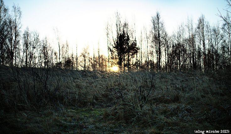 Cold December sun