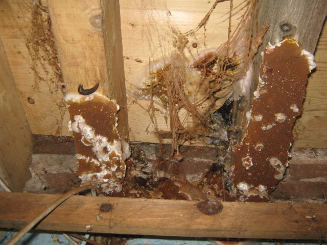 Pin On Dry Rot
