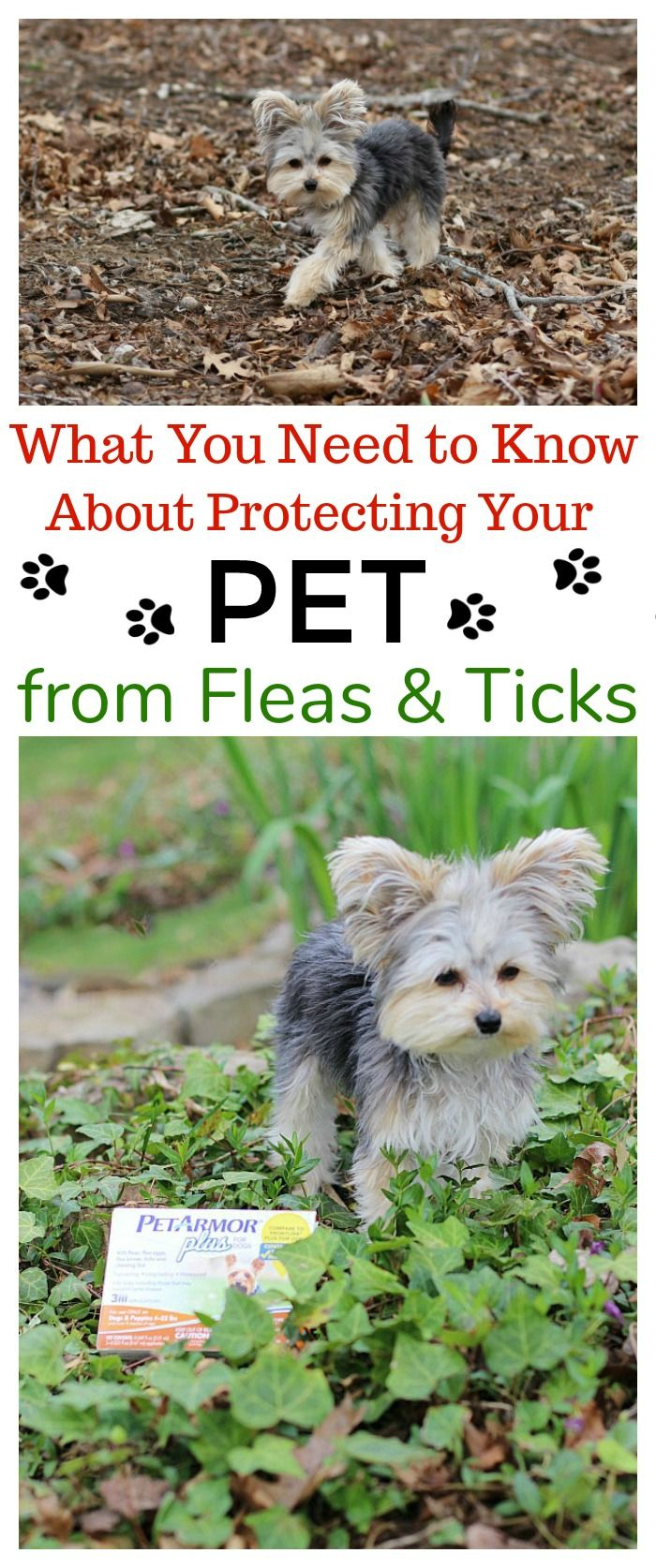 Pin By Mom Unleashed On Pets Dog Training Classes Dogs Dog Hacks