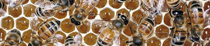 Plan Bee - Bees and Beekeeping Supplies in Denver Metro Area - Accessories