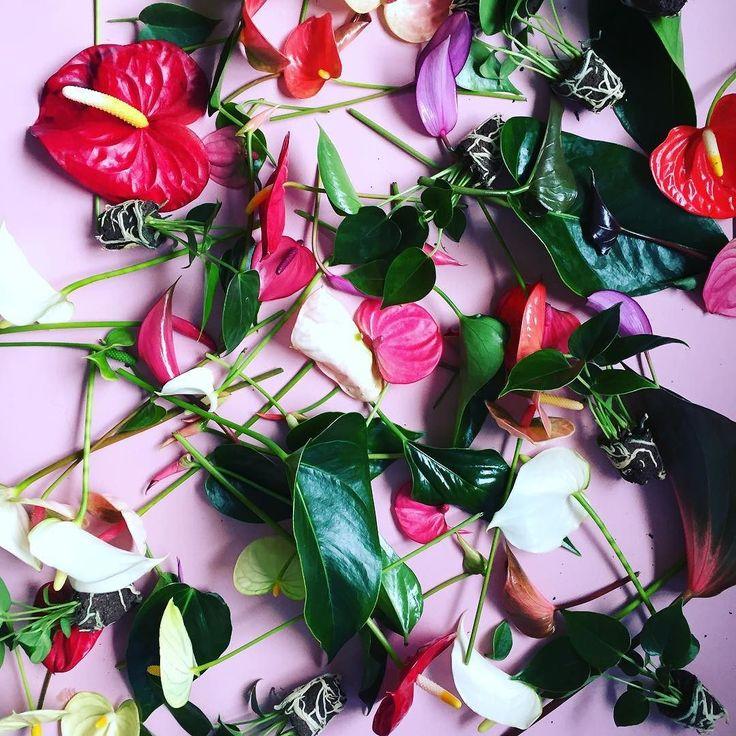 #mooi #De schoonheid van #bloem restanten na een #fotoshoot. #plant #colour #blad #kleur #stekjes #anthurium