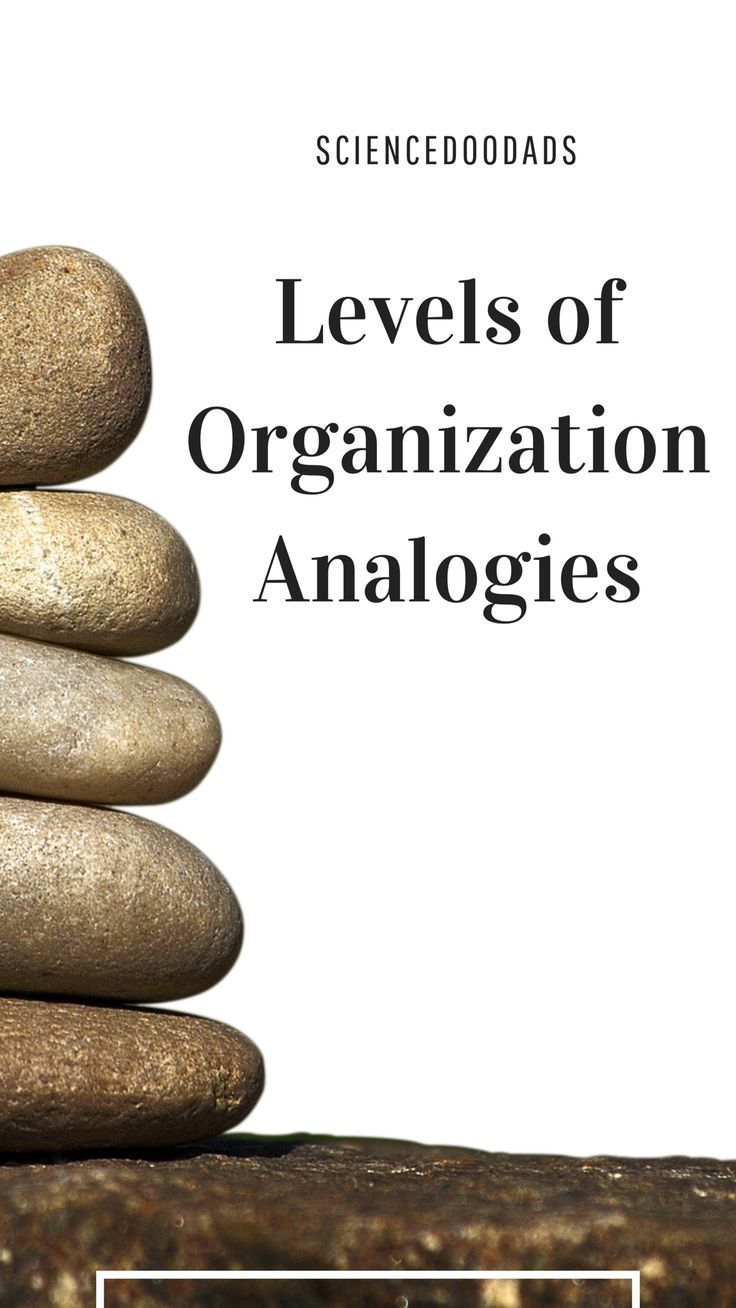 Levels Of Organization Analogies Teaching Tips Science