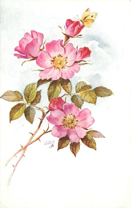 two stems from lower left, three pink dog roses with yellow centres and twobuds, butterfly at top
