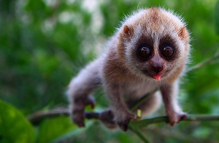 Cute Endangered Animals | ... Buzz Monster Are Cute Animal Videos Harming Endangered Species