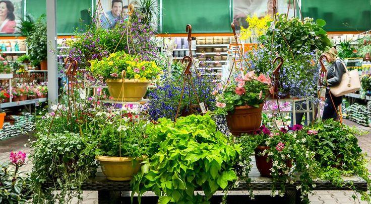 Цветущие растения в подвесных кашпо