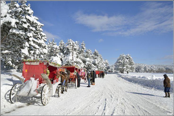 Snow Landscape - Abant National Park-Bolu/Turkey