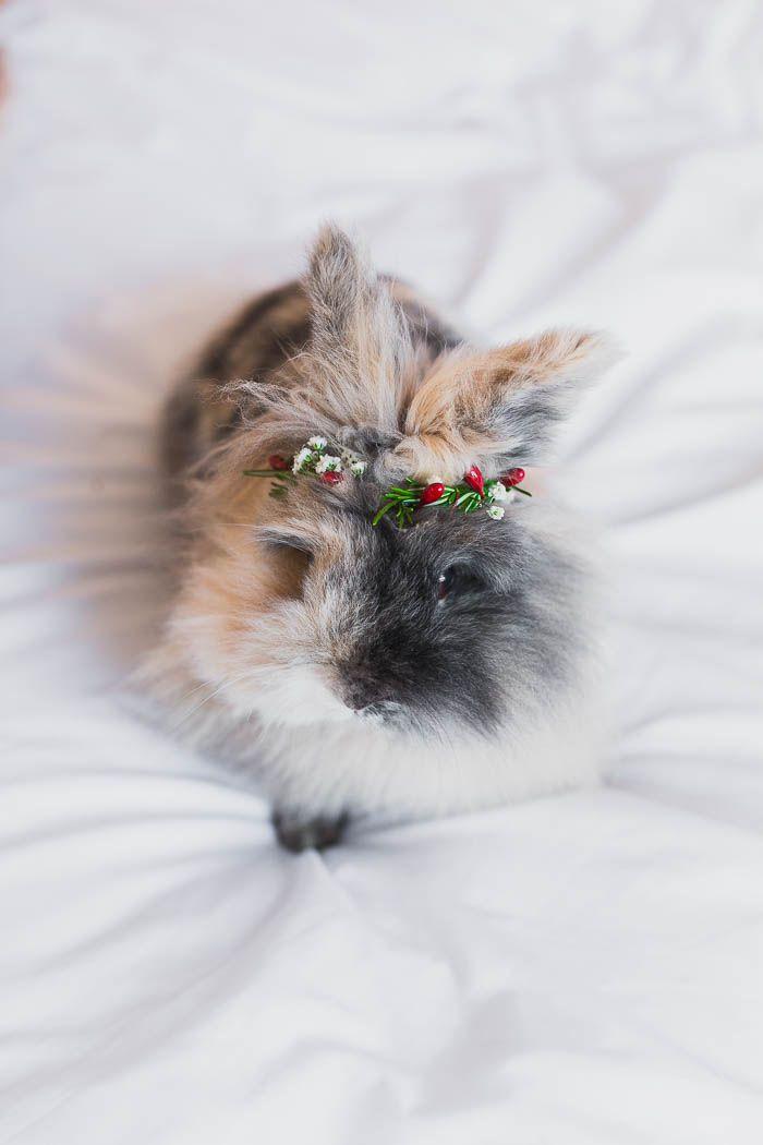 52 besten Furry Love Bilder auf Pinterest | Kätzchen, Flauschige ...