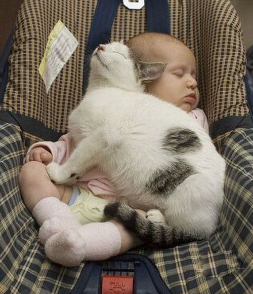 cute: Sweet, Pet, Baby Blankets, Cat Naps, Naps Time, Sleep Baby, Cars Seats, Animal, Baby Cat