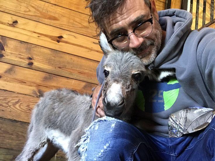 Jeffery with his newborn donkey ❤️
