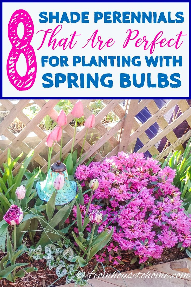 Combining Plants: Spring Video