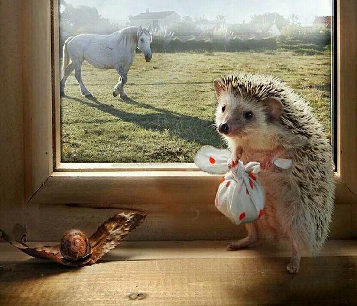Позитивные картинки с животными доброе утро