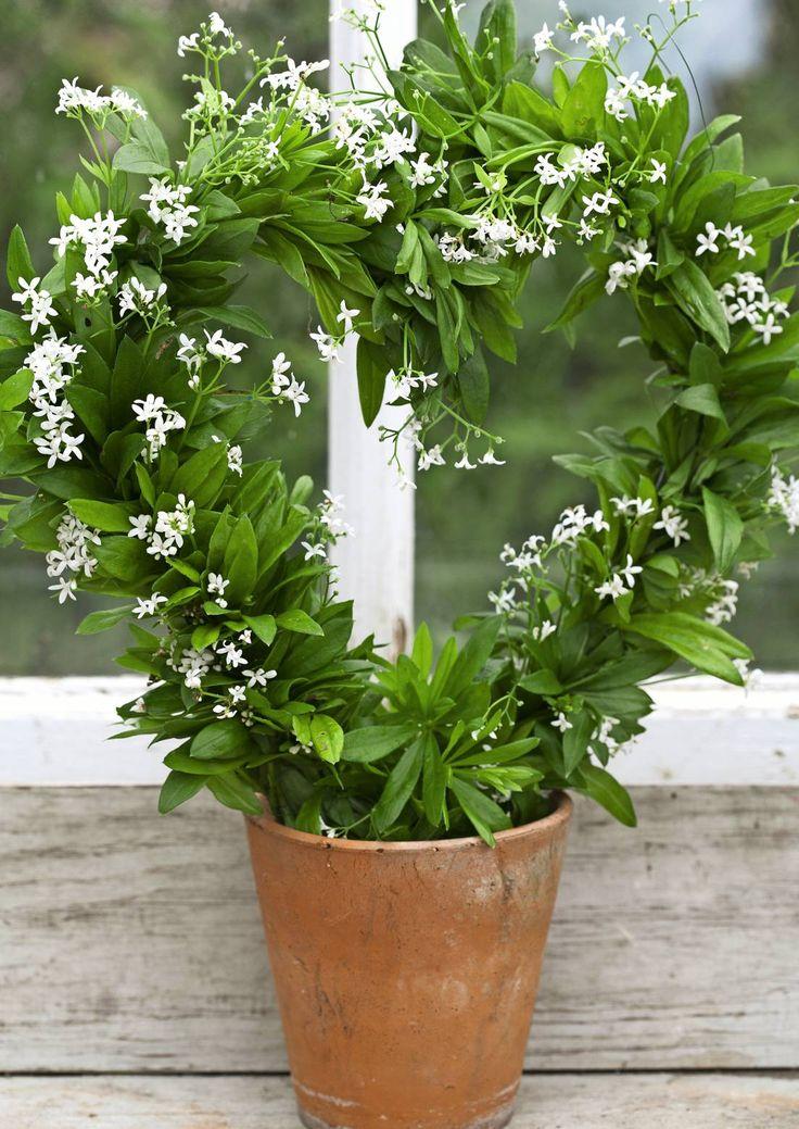 Tee ihanan kesäinen kukkakranssi tuoksumatarasta Viherpihan ohjeilla. Kasvin tuoksu voimistuu, kun se kuivuu.