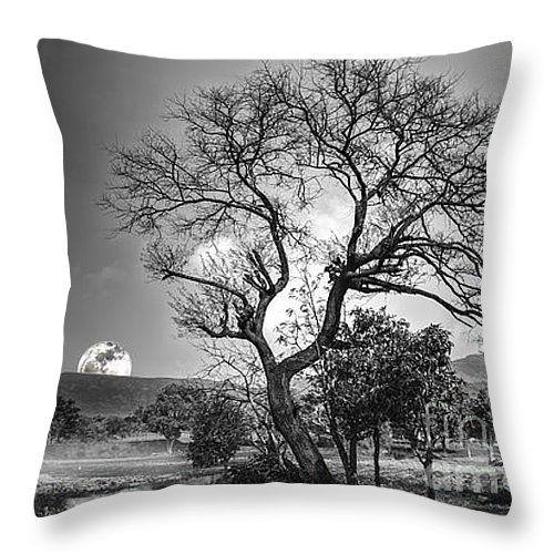 """Tree Throw Pillow 14"""" x 14"""""""
