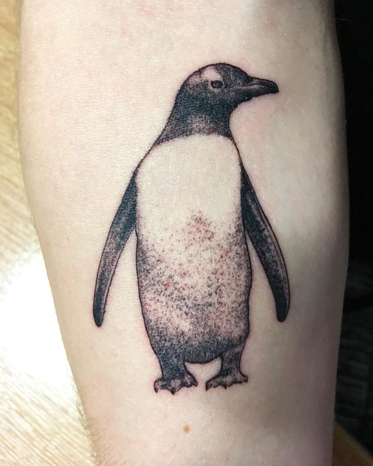PuePue The Penguin by Alex M Krofchak at The Tattooed Arms Lincoln UK. (i.redd.it) submitted by Tobesus to /r/tattoos 2 comments original   - Beautiful #Tattoos and Amazing #Bodyart - Traditional Ink Designs - Inked Sleeves - Neck and Face Tatts - Nerd Tattoos - Cringeworthy Tatts and Tattoo Mistakes from the Best and the Worst Artists of Instagram Twitter and Facebook via iMakeMerch