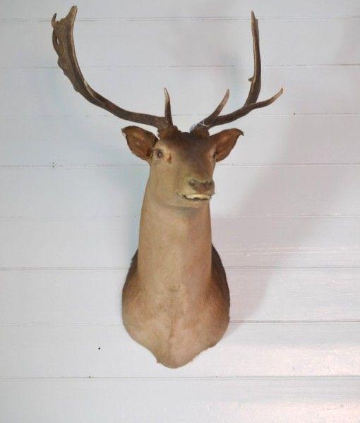 Vintage  Deer head  Taxidermy old wall hanging