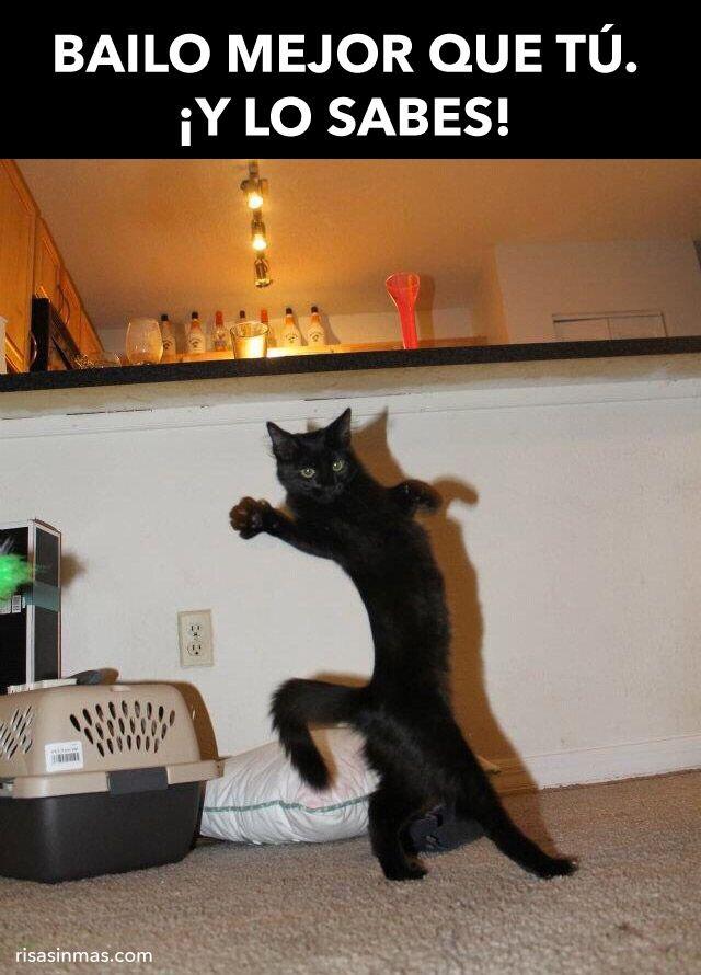 Un gato que baila mejor que tú