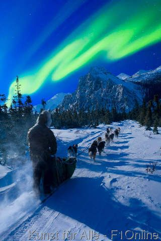 Musher and dog team traveling beneath the Aurora in the White Mountains Recreation Area during Winter in Alaska. Digital Composi