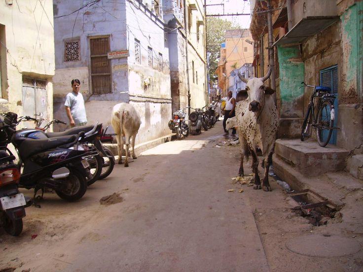 Artigo sobre a Índia: política, geografia e idiomas em www.viajarpelahistoria.com