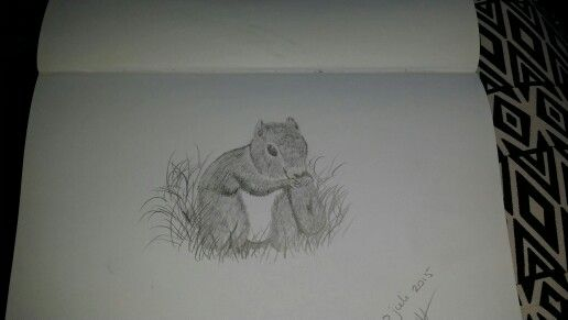 Eekhoorn getekend door  Schminkkoppies