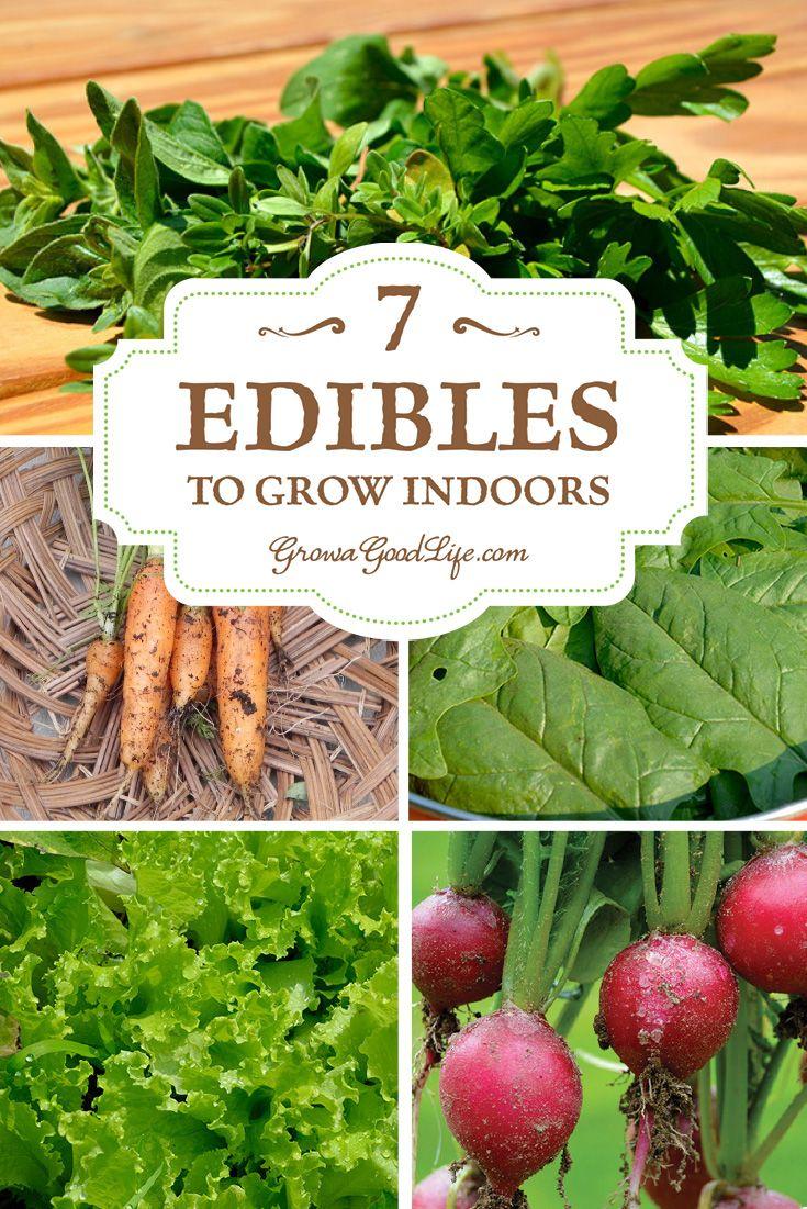 25 Best Ideas About Inside Garden On Pinterest Small