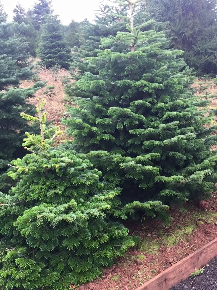 Marldon Christmas Trees - waternomics.us