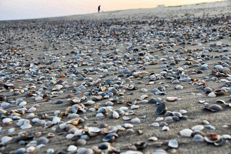 Texel´s Muschel-Strand