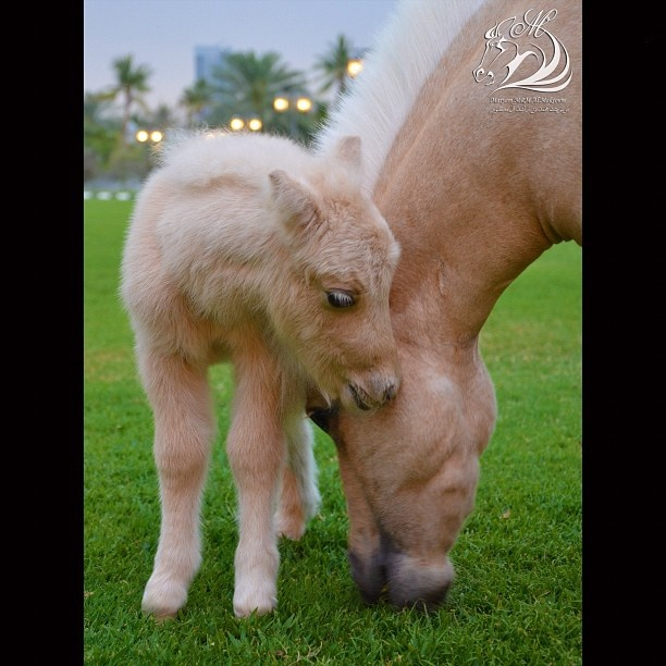 Photograph by Maryam bint Mohammed bin Rashid Al Maktoum (1st)