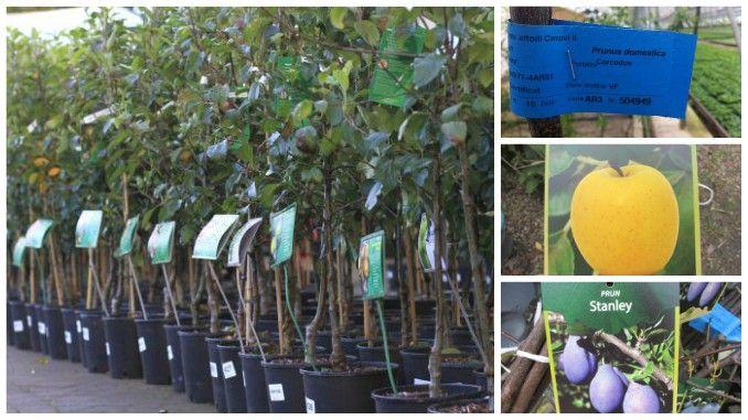 Atenție la materialul săditor pe care îl procurați pentru plantările de pomi fructiferi în această primăvară!Este sezonul plantării pomilor fructiferi, iar inginerii horticoli ne atrag ate