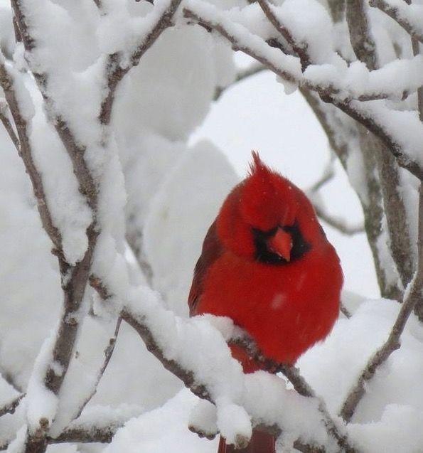 #birdwatching