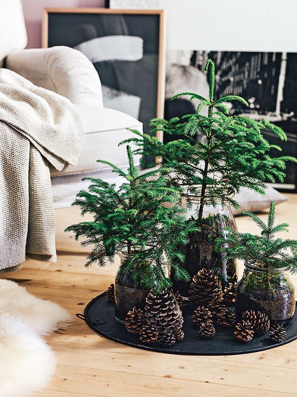 Natural Christmas decor #naturaldecor #christmasdecor