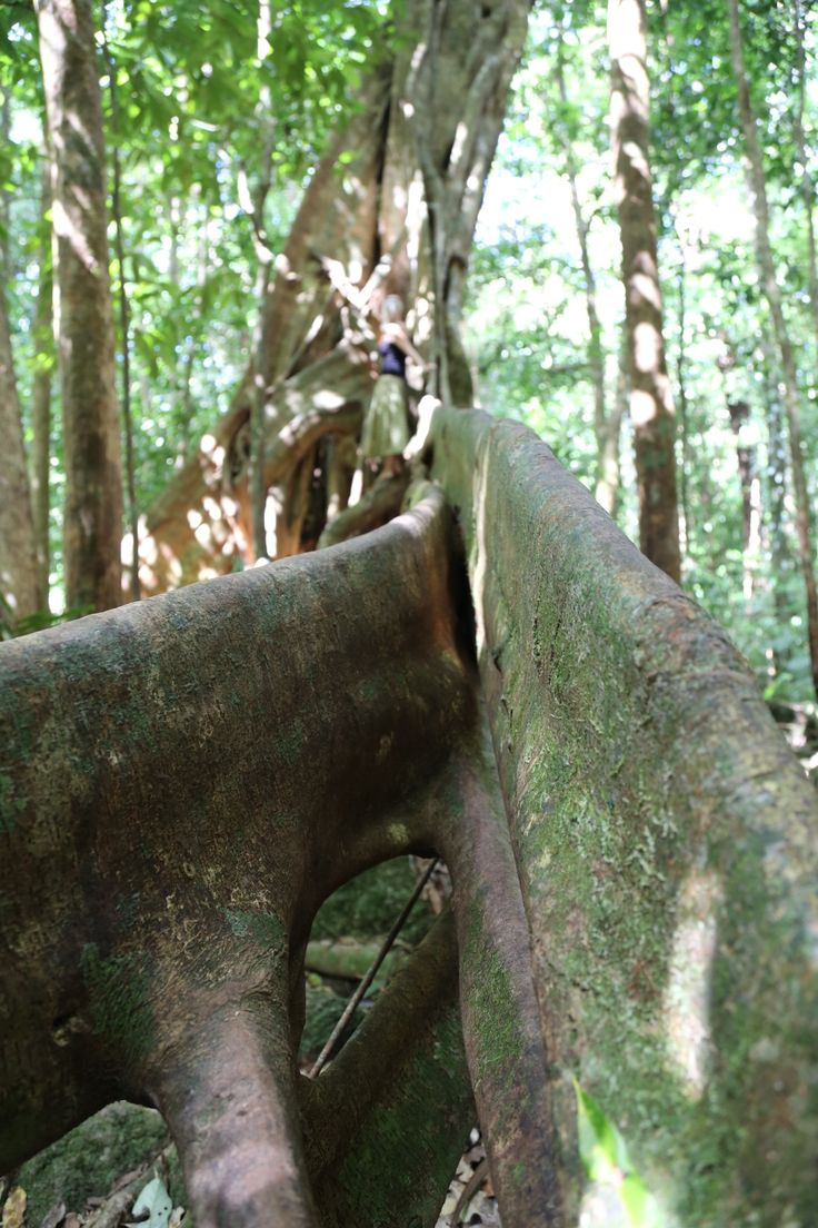 76 best daintree rainforest beauty images on pinterest
