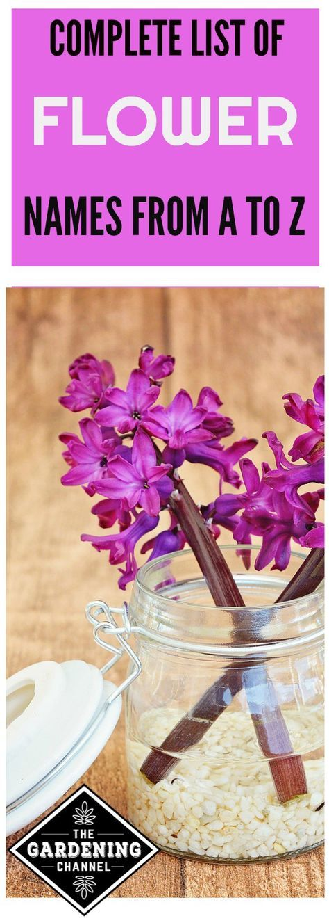 FLOWER NAMES. Complete list of flowers both perennial and annuals for your garden, vines, shrubs and bulbs.