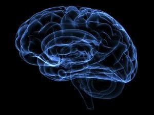 Dementia vs Alzheimer's disease - what is the difference? - Your Brain Health