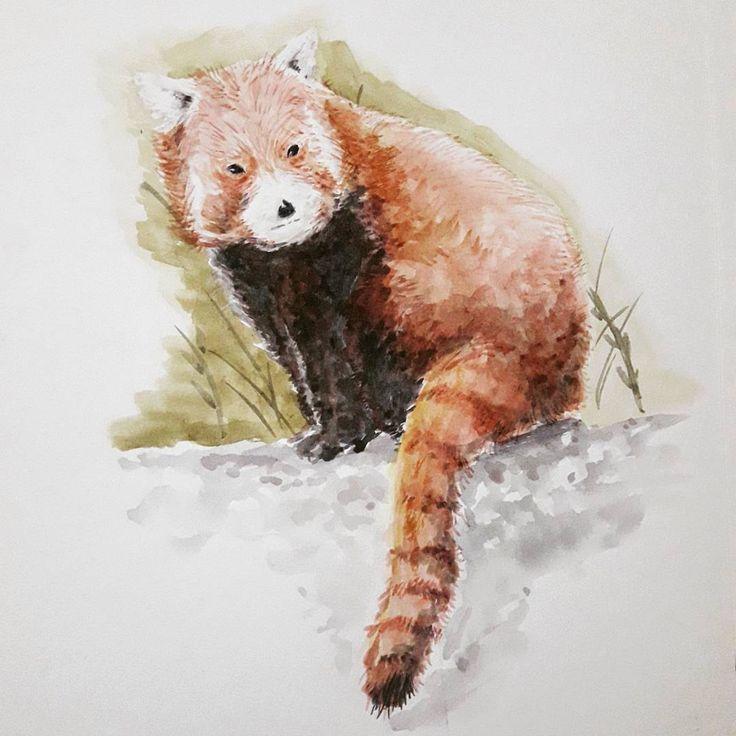 @poucalabaza panda rojo, croquis animales