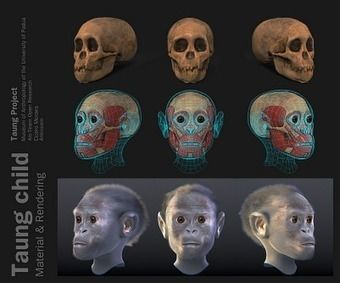 ATOR: Taung Project: 3D Forensic Facial Reconstruction | Open Cultural Heritage | Scoop.it